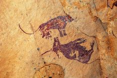 Digital photograph (colour); detail of painted rock art from [2013,2034.2082] on wall of rock shelter, showing figures of lion and cow infilled in brown but for the marking on the cow's hide and its hooves. Naturalistic.  Lion stands upright above the cow, which lies upside down, head to left, attitude suggesting  it has been killed by the lion.  Arm of brown human figure cut off at edge of image at top right. Emi 'n' Eher, Wadi Aramat, Tassili n'Ajjer, Libya Scanned
