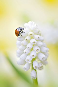 Love Share and Keep Smile — Muscari Lady por Jac moment love