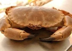 The Cromer crab, the king of crabs.