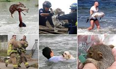 Images capture heroic animal rescues from around the world #DailyMail