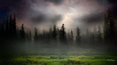 Sunrise in foggy woods (1920x1080, foggy, woods)  via www.allwallpaper.in