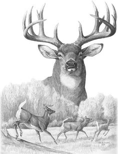 Wildlife Print featuring the drawing North American Nobility Whitetail Deer by Laurie McGinley.need some deer imges so I can do some deer art. Haven't drawn deer before .need to study their lines Wood Burning Patterns, Wood Burning Art, Hirsch Tattoo, Tattoo Schwarz, Deer Drawing, Hunting Tattoos, Deer Pictures, Deer Art, Wildlife Art