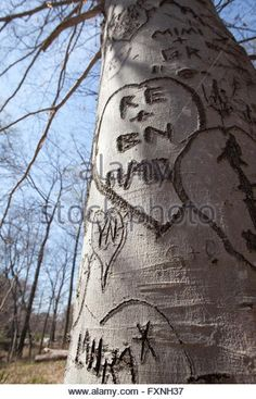 initials-in-heart-carved-on-tree-trunk-usa-fxnh37.jpg 347×540 pixels