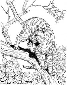 Tiger in a Jungle coloring page | Super Coloring http://www.supercoloring.com/pages/tinger-in-a-jungle?colore=online#