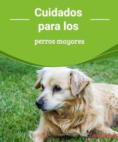 Cuidados para los perros mayores  Cuando nuestras mascotas envejecen van teniendo necesidades específicas, les dejamos algunos consejos sobre cuidados para perros mayores.