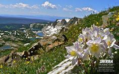 Mountain flowers - Adventure photo by Mike Mills  --via our #ShareYourAdventure photo contest. Submit your photos here: http://stp.me/SYAPContest