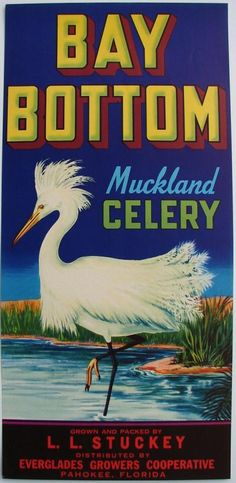 BAY BOTTOM Vintage Pahokee Florida Celery Crate Label