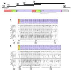 Hornbill mitochondrial genomes. http://www.biomedcentral.com/1471-2164/12/35