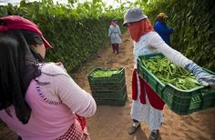 Las importaciones de hortalizas marroquíes crece un 26% en el primer semestre