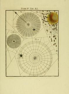 D.4,pt.1 - De natuurlyke historie der insecten; - Biodiversity Heritage Library