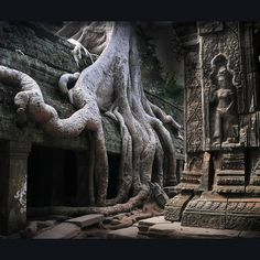 Angkor, Cambodia - was this before or after the alien popped out? Angkor Temple, Angkor Wat, Vietnam, Wonderful Places, Beautiful Places, Amazing Places, Places Around The World, Around The Worlds, Laos