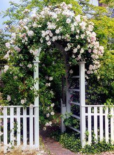 Rose Archway White Picket Fence New England Coast Cape Cod Travel. Picket Fence Garden, Garden Gates And Fencing, White Picket Fence, Garden Archway, Garden Entrance, Garden Arbor, Pergola, Beach Wall Decor, Climbing Roses