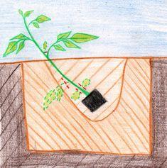 schema plantation tomates Balcony Garden, Garden Plants, Culture Tomate, Potager Bio, Small Gardens, Horticulture, Vegetable Garden, Gardening Tips, Bouquet