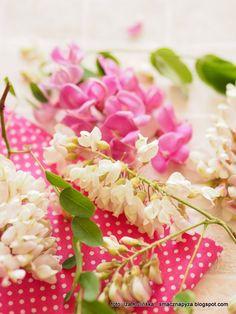 kwiaty_robinii_akacjowej
