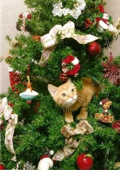 20 Cats In Christmas Trees this is going to be our tree 2013. Oh! the fun.