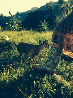 Boots inspecting goats, Bertie &. Gertie, that we bought for Navala village school children as part of support for FijiOz foundation.