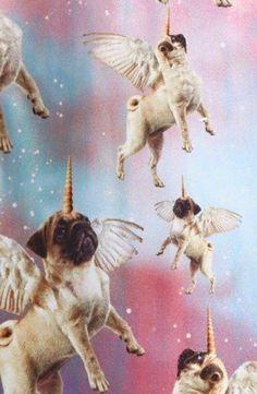Pugs/ perros/ fondos de pantalla/ wallpaper/ hipster/ lindo/ cool/ colores/ colors/ pretty/ unicorns/ unicornios