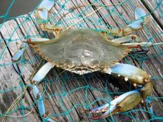 outer banks crabbing, nags head nc, manteo nc