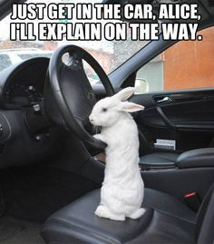 Just get in the car, Alice I'll explain on the way! This is just too funny!! I love it!! Ha ha ha