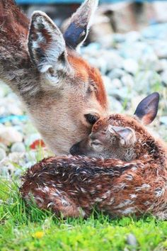 Sweet mom kisses