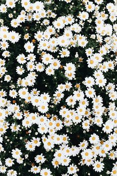 Finders Keepers and Brittney Gurr Photo Collaboration Frühling Wallpaper, Whats Wallpaper, Retro Wallpaper Iphone, Flower Iphone Wallpaper, Flowery Wallpaper, Sunflower Wallpaper, Iphone Background Wallpaper, Aesthetic Iphone Wallpaper, Aesthetic Wallpapers