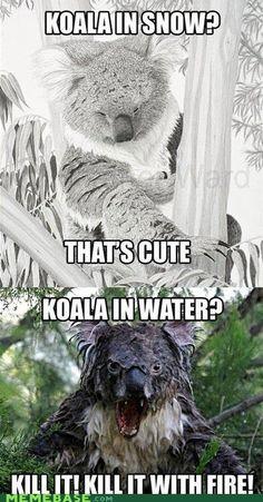 Koala in snow? Koala in water? Too funny! Funny Shit, Funny Cute, Haha Funny, Funny Memes, Funny Stuff, Scary Funny, Scary Scary, That's Hilarious, Funny Tweets