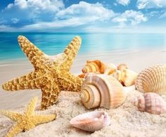 113142-Pretty-Shells-Starfish-On-The-Beach.jpg (450×372)