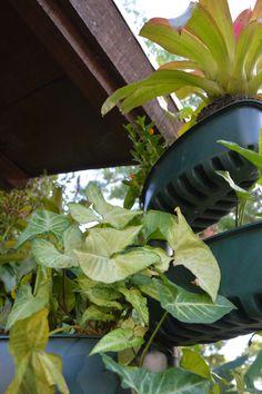 Plante: por um mundo mais verde!