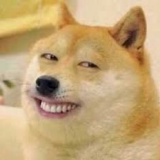 My facial expression when my family talks to me when I'm at a good Funny Animal Memes, Funny Dogs, Cute Dogs, Funny Animals, Cute Animals, Memes Humor, Cat Memes, Funny Memes, Doge Meme