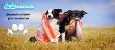 Siempre puedes encontrar el amor para tu mascota en nuestra web :)