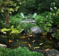 Looks almost identical to my backyard pond and fish. My fish have a large jar to swim up into above the water. surface