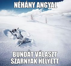 Mert ők tényleg angyalok! Life Is A Journey, Animal Quotes, Westies, Akita, I Love Dogs, Yorkie, Animals And Pets, Funny Pictures, Lol
