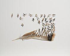 Arte con Plumas por Chris Maynard