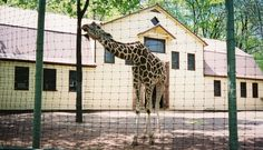 Giraffe born at The Catskill Game Farm - April pictured There were many animals born at The Catskill Game farm over the 73 years  they were open. April is one of them,bottle raised by staff she grew up  at The Catskill Game Farm and stayed there until it closed in 2006. She  has spen