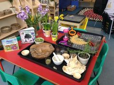Herb investigation, bean sorting, and natural plants. Science Area, Plant Science, Science For Kids, Science And Nature, Early Years Classroom, New Classroom, Spring Activities, Science Activities, Investigation Area