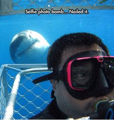 Funny pictures about Selfie Shark Photobomb. Oh, and cool pics about Selfie Shark Photobomb. Also, Selfie Shark Photobomb photos. Cute Funny Animals, Funny Cute, The Funny, Memes Estúpidos, Funny Memes, Funny Boyfriend Memes, Funniest Jokes, All Meme, Great White Shark