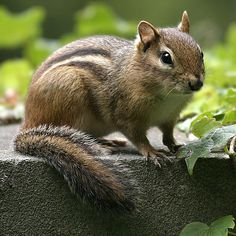 Remember Wednesday, 25 Sept. 2013, SERU, when we went to the refuge and saw several chipmunks and squirrels?