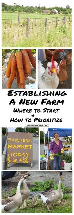 How to Establish a New Farm: Where to Start and How to Prioritize. From Runamuk Acres Farm & Apiary in Maine!