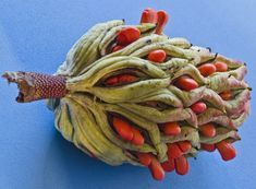 Magnolia Seed Pod a bowl of these colorful seed pods would be ovely