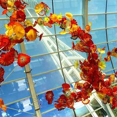 Fall's flowers in Chihuly Garden and the Space Needle. #Seattle #USA #visitusa #travel #traveling #citylife #instapic #picoftheday #architecture #love #fall