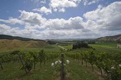 Top 10 New Zealand Wine Producers
