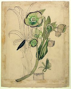 Charles Rennie Mackintosh, Hellebore Green, 1915