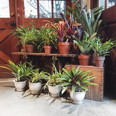 158 Best Plants And Pottery Images On Pinterest In 2018 Plantas De Interior Suculentas