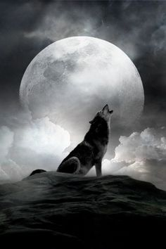 """What if the wolf is in love with the moon and each night it crys out for a love that it can never touch."""