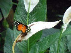 Serena #bloggerpercaso nella casa delle farfalle #golivefvg
