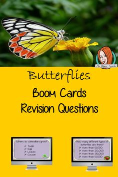 Butterflies Revision Questions This deck revises children's knowledge of Butterflies. There are multiple choice revision questions to check children's understanding. These question cards are self-grading and lots of fun! Lessons For Kids, Science Lessons, Teaching Science, All About Me Crafts, Role Play Areas, Multiple Choice, Classroom Activities, Teacher Resources, Butterflies