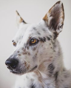 For every collar purchased from The Pawsitive Co. you donate food to a dog in need. Buy a collar. Click the link to buy now! I Love Dogs, Cute Dogs, Best Dog Photos, Dog Mixes, Raining Cats And Dogs, Mountain Dogs, Dog Photography, Best Dogs, Dogs And Puppies