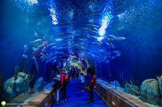 Poze de la Oceanograful din Valencia Valencia, City Break, Aquarium, Goldfish Bowl, Aquarium Fish Tank, Aquarius, Fish Tank
