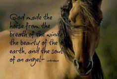 """God made the horse from the breath of the wind the beauty of the earth, and the soul of an angel"""