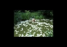 """060814-8816 Hommage an Monet (Jessica & """"Seerosen"""", Buchschlag), 2014, 42 x 59 cm, 70 x 100 cm, gerahmt, in durchgefärbtem, archivalischem Passepartout, Archiv. Pigmentdruck auf Hahnemühle Papier, handsigniert, Edition 3/5. Dieses Jahr spende ich der Stiftung Palmengarten eine meiner schönsten Fotografien. An der Auktion sind Thomas Bayrle, Barbara Klemm, Vollrad Kutscher, A.R. Nele, Tobias Rehberger und Anke Röhrscheid beteiligt. Die Auktion dient der Finanzierung  des Schmetterlingshauses."""